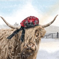 Highland Cow 2 Fine Art Print
