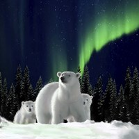 Polar Family 2 Fine Art Print