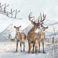 Stag And Females Fine Art Print