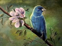 Blue Finch Fine Art Print
