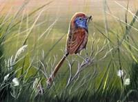 Emu Wren Fine Art Print