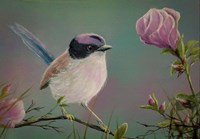 Purple Crowned Fairy Wren Fine Art Print