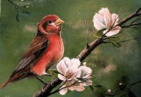 Red Finch Fine Art Print
