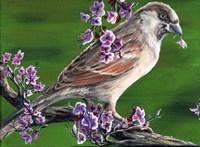 Sparrow Fine Art Print