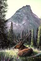 Yellowstone Elk Fine Art Print