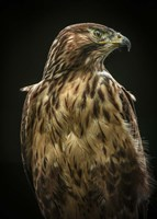 Predator Bird Fine Art Print
