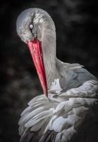 The Stork Fine Art Print