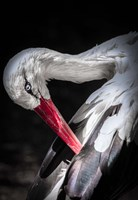 The Stork II Fine Art Print