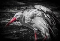 The Stork IV Fine Art Print