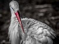 The Stork VI Fine Art Print
