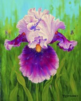 Dewdrop Iris Fine Art Print