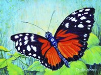 Butterfly Beauty Fine Art Print
