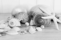 Collection of Shells BW Fine Art Print