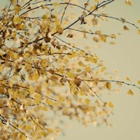 Fall Leaves 10 Fine Art Print