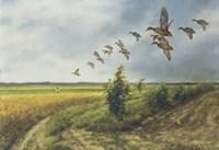 Migration Fine Art Print