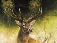 Antlers Fine Art Print