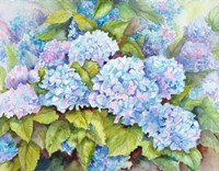 A Cluster of Hydrangeas Fine Art Print