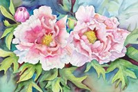 A Pair of Peonies Fine Art Print