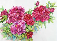 A Study of Red Peonies Fine Art Print