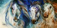 3 Wild Appaloosa Horses Fine Art Print