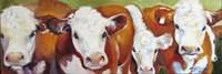Fab Five Cows Fine Art Print