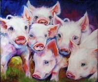 Half Dozen Piglets Fine Art Print