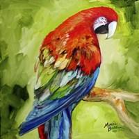 Macaw Tropical Fine Art Print