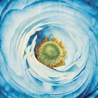 White Peony with Blue Fine Art Print
