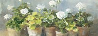 White Geraniums v2 Fine Art Print