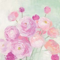 Soft Ranunculus Fine Art Print