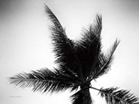 Palm Tree Looking Up IV Fine Art Print
