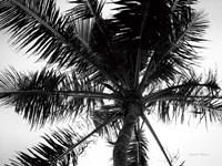Palm Tree Looking Up III Fine Art Print