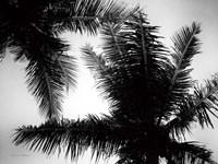 Palm Tree Looking Up I Fine Art Print