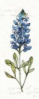 Texas Bluebonnet IV Fine Art Print