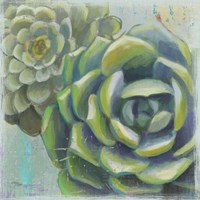 Succulents II Crop Fine Art Print