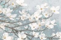 Dogwood Blossoms II Blue Gray Crop Fine Art Print