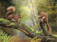 Red Squirrels Fine Art Print