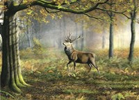 Red Stag Fine Art Print