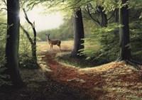 Roe Deer Fine Art Print