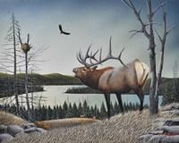 Bugling Elk Fine Art Print