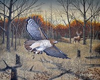Red-Tailed Hawk Fine Art Print