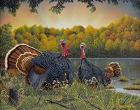 Turkey Season Fine Art Print