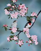 Red-breasted Grosbeaks Fine Art Print