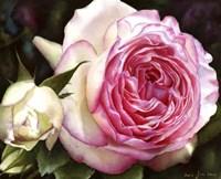 Eden Rose With Bud Fine Art Print