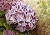 Hydrangea With Ivy Fine Art Print