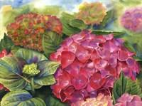 Pink Hydrangea Fine Art Print