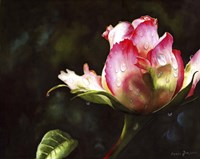 Pink Rose Bud With Dewdrops Fine Art Print