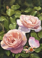 Rose Clair Renaissance Iii Fine Art Print