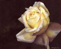 Rose Elfe Fine Art Print