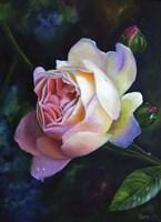 Rose Ghislaine De Feligonde Fine Art Print